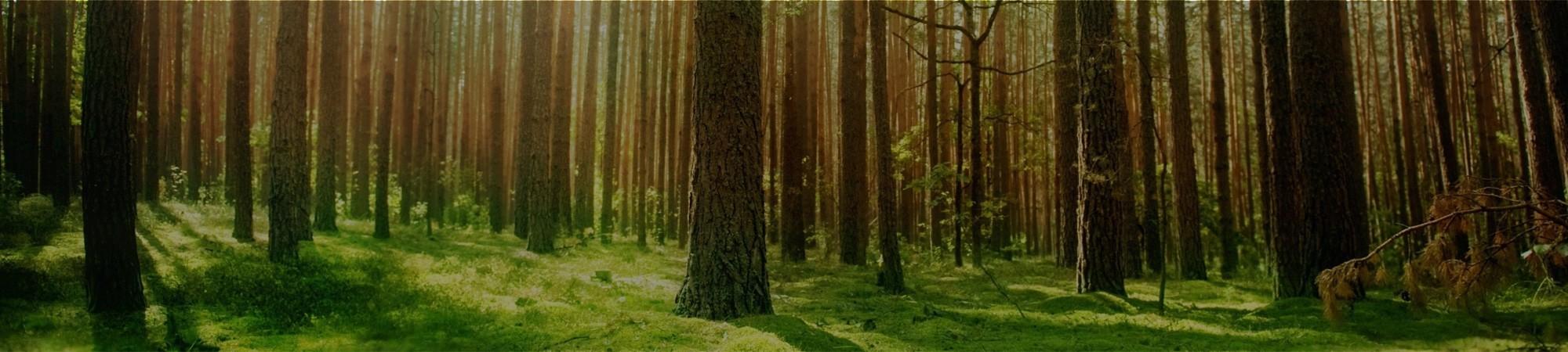 environmental-banner